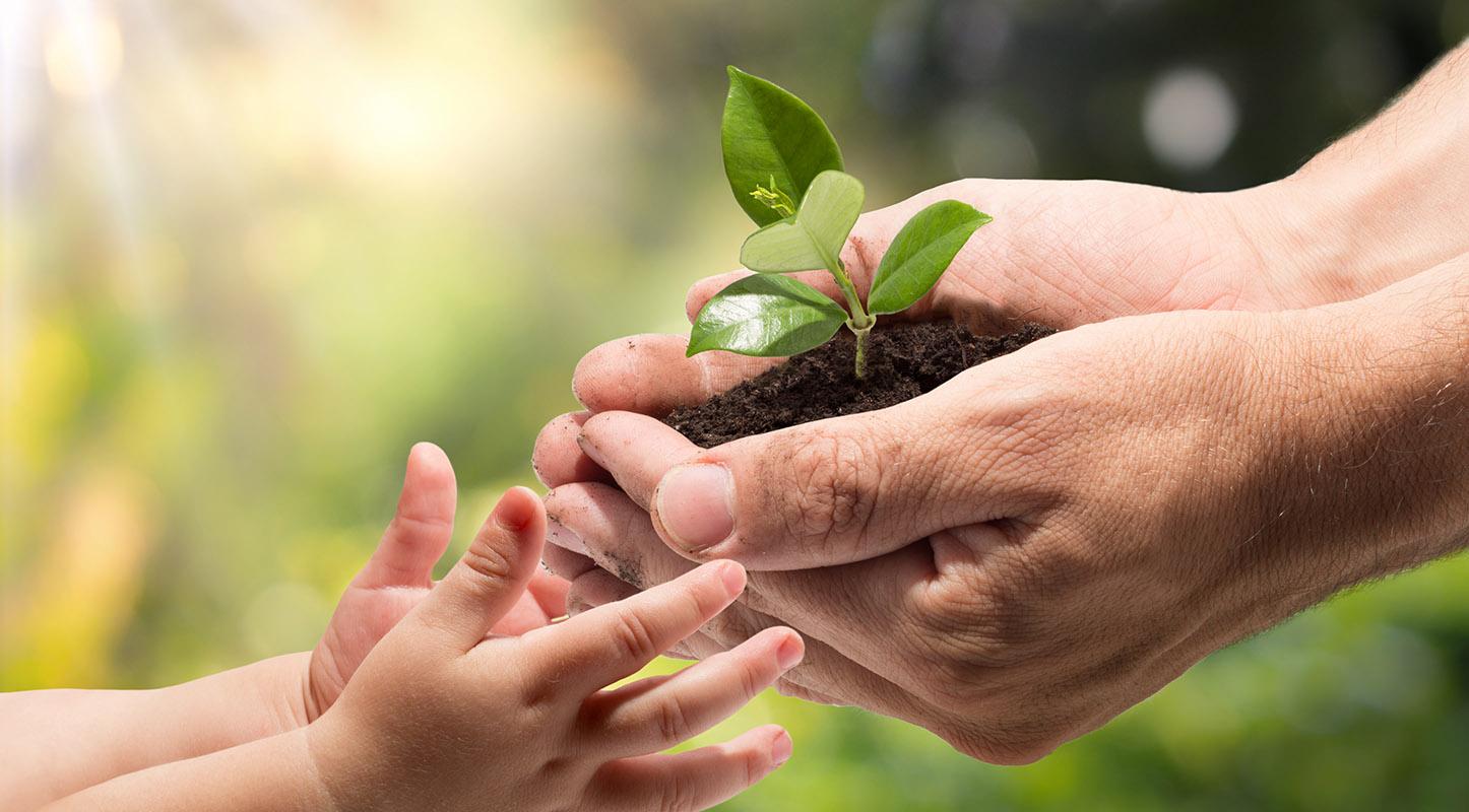 biostimulants and fertilizers